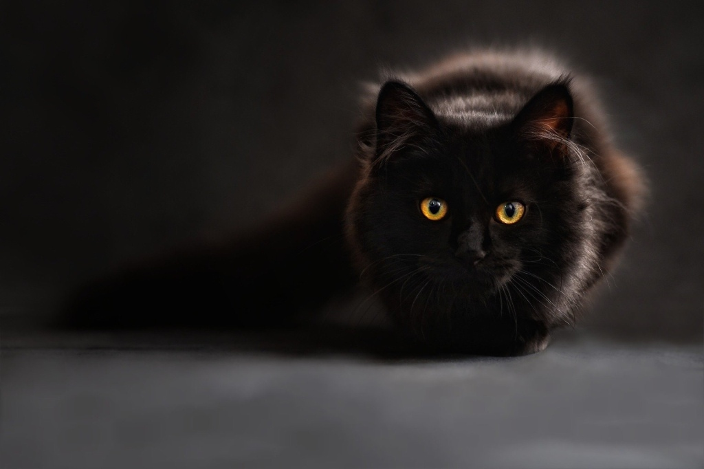 Black cat staring at camera.